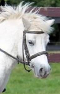 horseshead